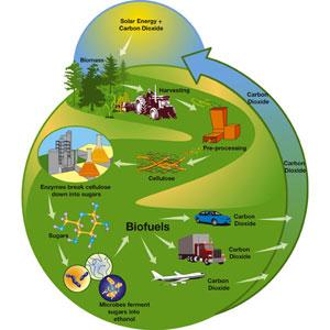 Biomasa - resursi